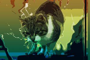 Kitten color