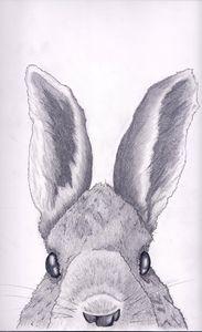 Rabbit Top