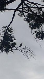 Shady birds