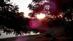 Sunset Lens Flare