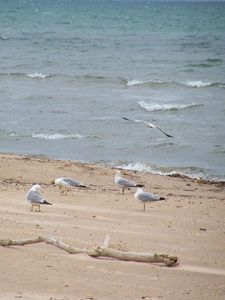 Beach, Waves and Seagulls