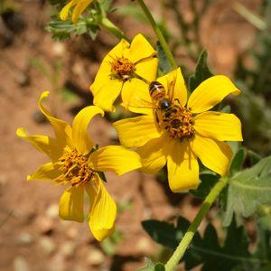 Honey Bee's Delight