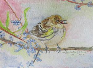 Bird with blueberry