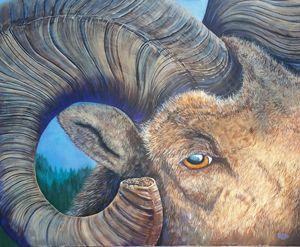 Eye of a ram