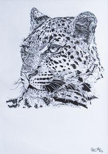 Leopard portrait - Mistry Visuals
