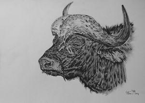 Buffalo portrait - Mistry Visuals