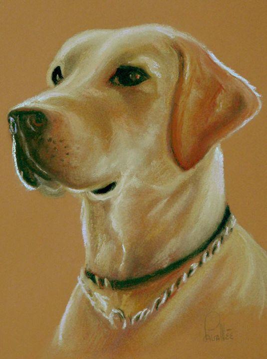 Labrador pastel portrait - imaginart