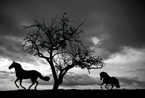 Horses galloping in the moonlight