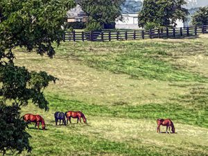 FWC Horse Country