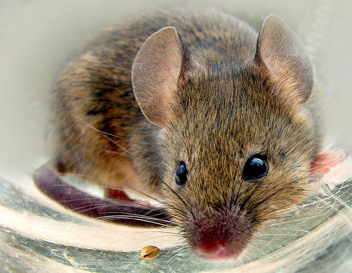 Mouse Snack - Martina Rathgens Art & Photography