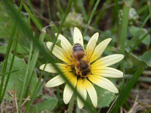 Bee On Flower - samararose photography