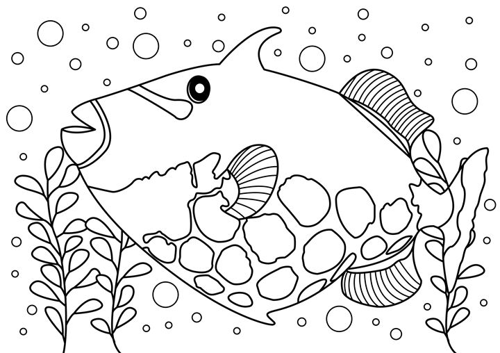 Trigger Fish Coloring Page - Clyde C