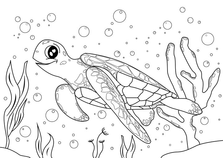 Turtle Coloring Page - Clyde C