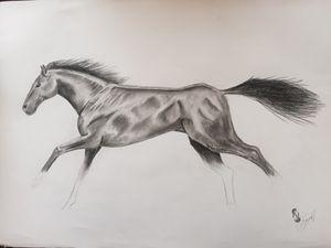 Silver Gallop