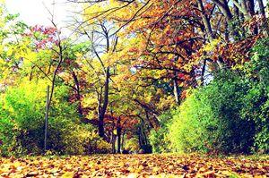 Walking Wisconsin in Fall
