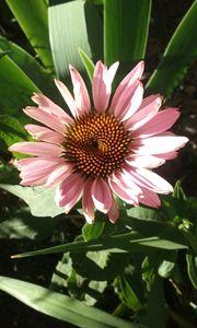 Spiral Pink