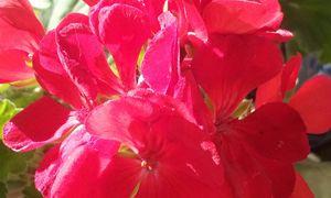 Closeup Red