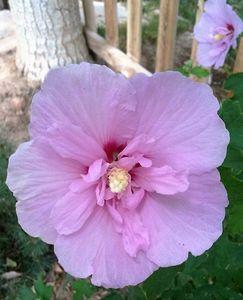 Flower Within Flower