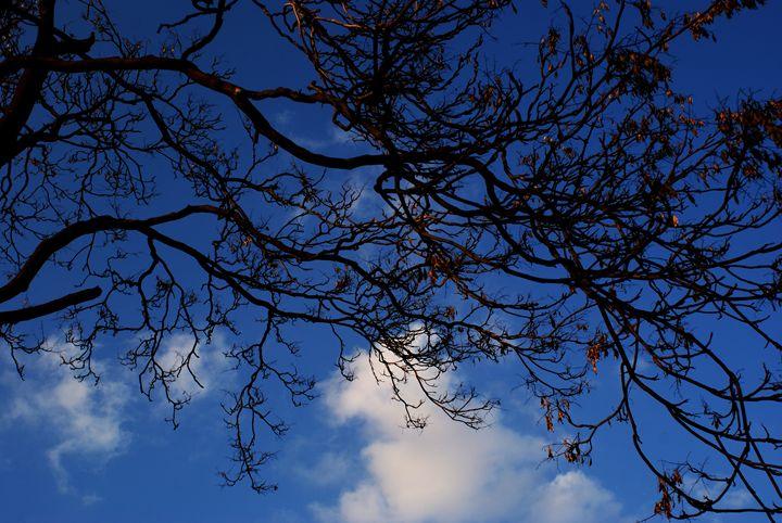 Incandescent Tree - Selene