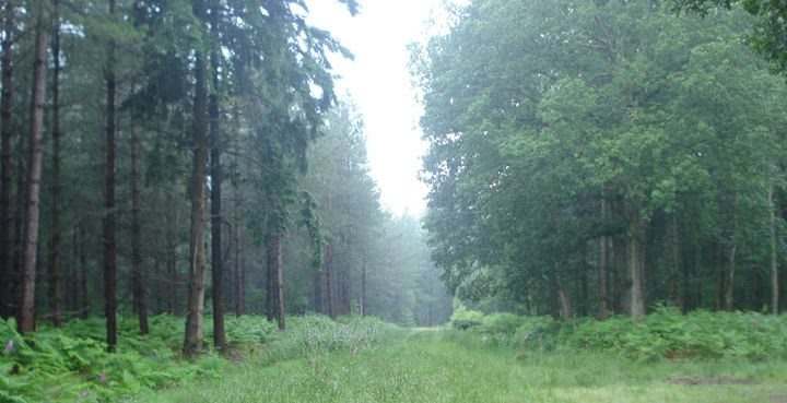 Forest - Vicky Kent