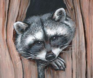 raccoon -  Ferrum.artist.ka