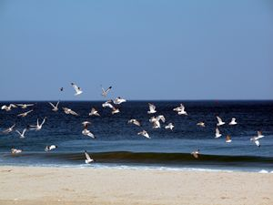 Who let the gulls out?