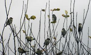 Hangen at the tree top - Rachel's Photos & Drawings