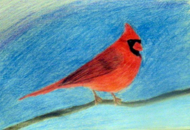 Cardinal Drawing - Rachel's Photos & Drawings