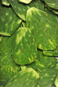 Nopales leaves