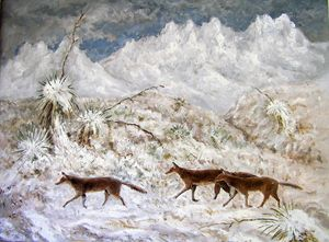 Coyotes in the Snow