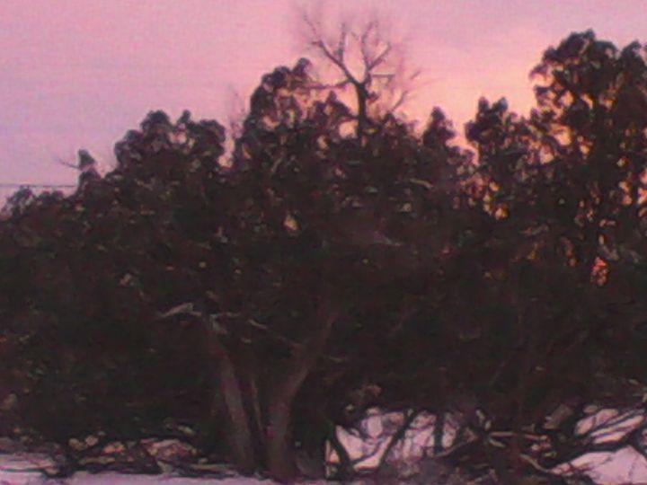 Arizona Winter - My Evil Twin