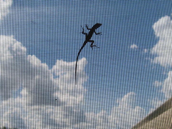 Baby Lizard - My Evil Twin