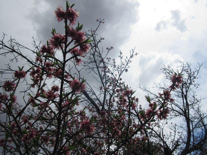 Budding Tree - My Evil Twin