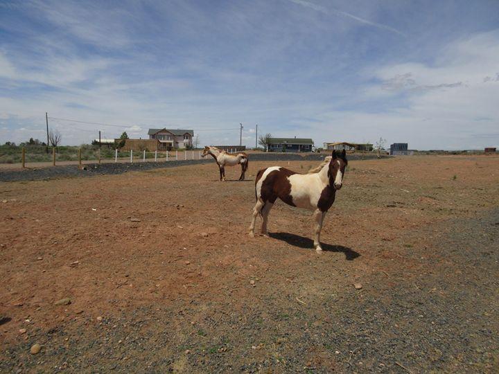 Paint Horses - My Evil Twin