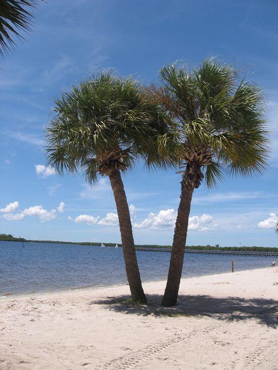Palm Trees - My Evil Twin
