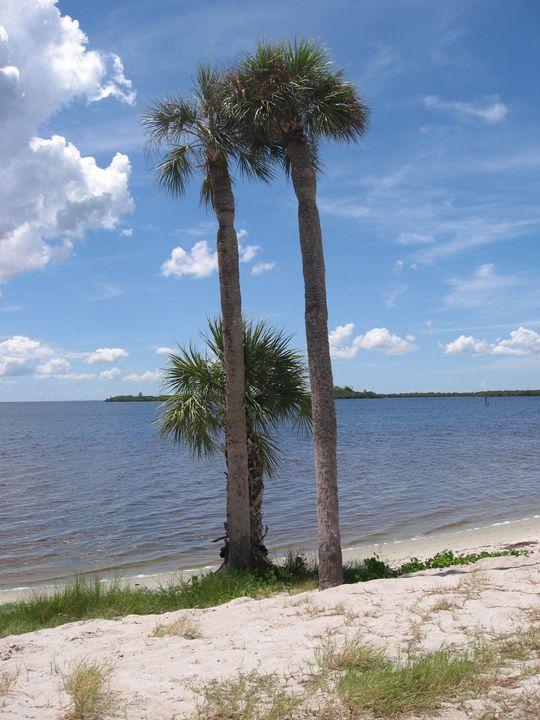 Palms On The Beach - My Evil Twin