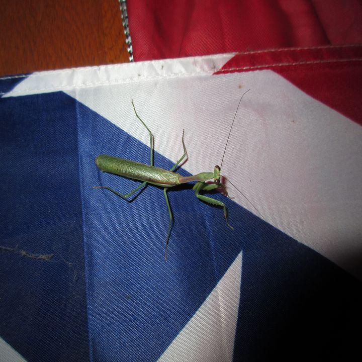 A Praying Mantis #9 - My Evil Twin