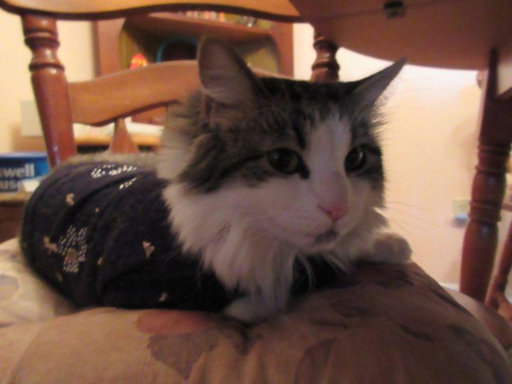 Retired Cat #2 - My Evil Twin