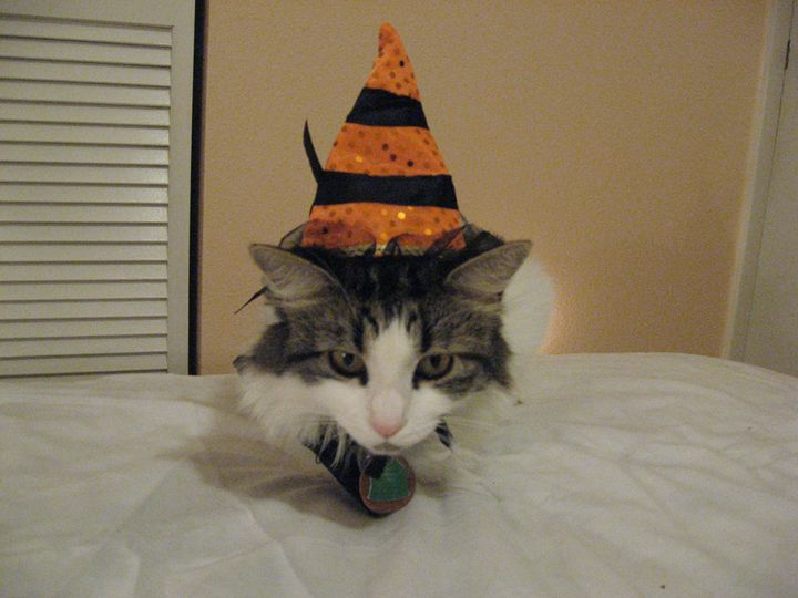 The Cat Is The Witch! - My Evil Twin