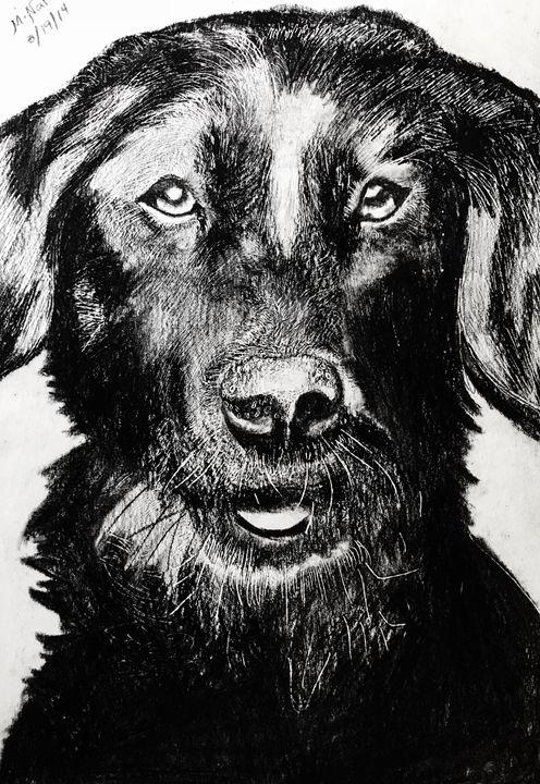 Black Dog - Mariam
