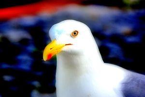 Seagull - Alexandra Luiza Dahl