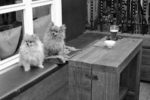 Pomeranians Sharing A Beer