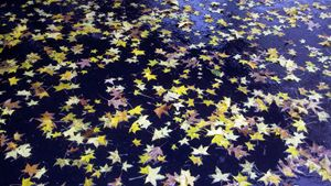 Floating Yellow Leaves