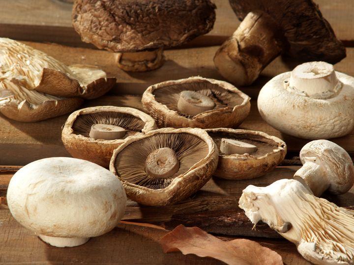 Different types of mushrooms - PhotoStock-Israel