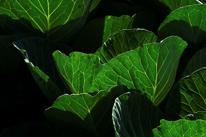 close up of lush green leafs - PhotoStock-Israel