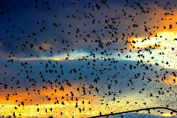 flock of birds at sunset - PhotoStock-Israel