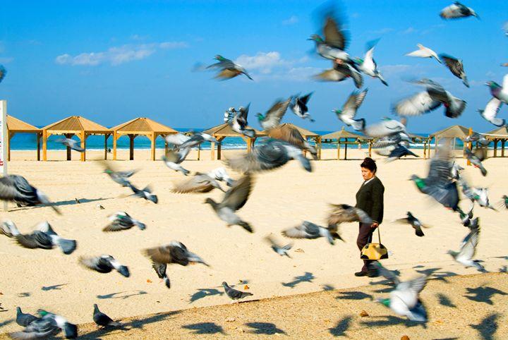 Pigeons on the beach, Tel Aviv, Isra - PhotoStock-Israel
