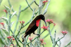 sunbird, Lake Manyara National Park - PhotoStock-Israel