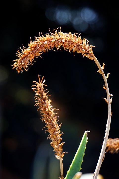 Orange flower close-up - PhotoStock-Israel