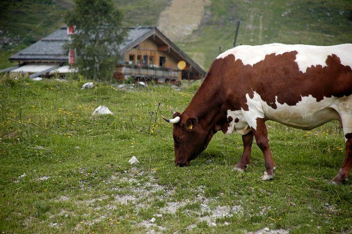 Gosau in the Dachstein Mountains - PhotoStock-Israel